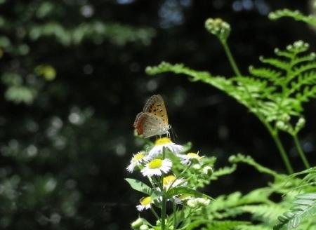 清水の昆虫達 2019-07-04 099