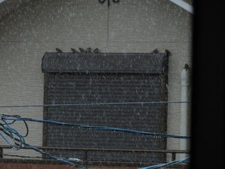 豪雨と雀 2019-07-29 003