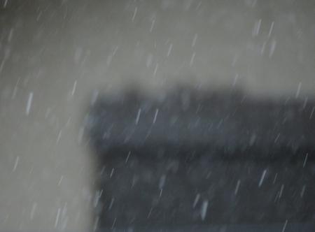 豪雨と雀 2019-07-29 002
