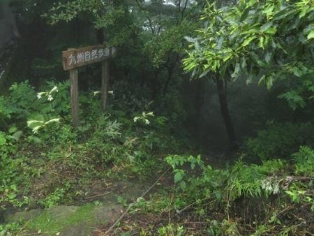 狐 八幡岳 2019-07-30 031