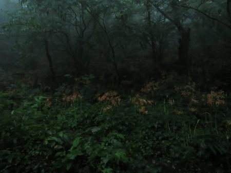 狐 八幡岳 2019-07-30 063