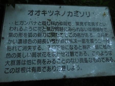 狐 八幡岳 2019-07-30 058