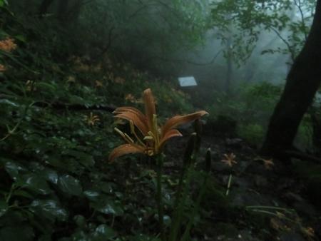 狐 八幡岳 2019-07-30 068
