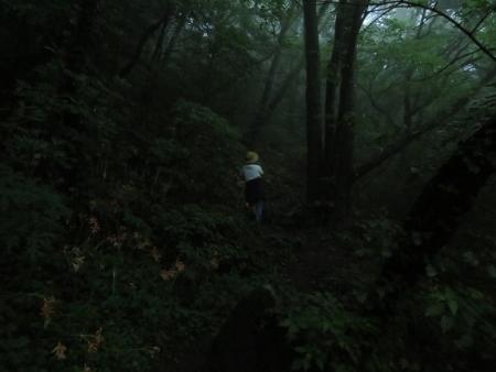 狐 八幡岳 2019-07-30 055