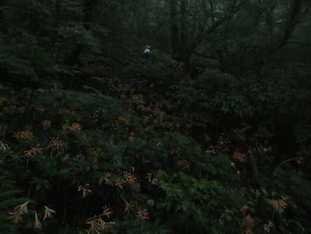 狐 八幡岳 2019-07-30 056