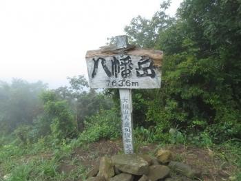 狐 八幡岳 2019-07-30 087