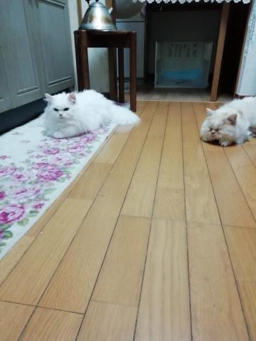 あらまwが屋の猫達