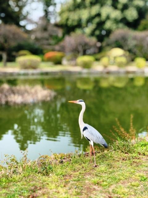 10水城公園(埼玉県行田市)