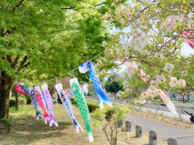 50近藤沼公園(群馬県館林市)