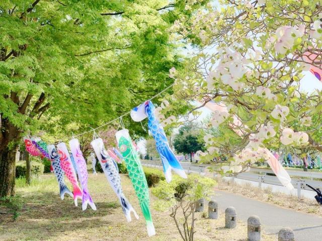 050 こいのぼり (4)