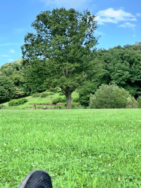 090 森林公園 (2)