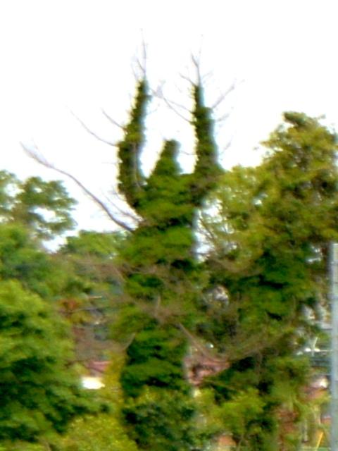 10 万歳してる木 (2)