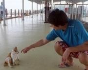 拳論ときどき猫論 片岡亮の猫とボクシングと馬来