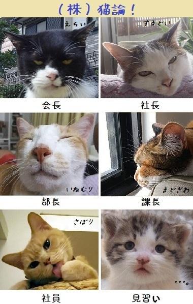 catcompany0908_1.jpg