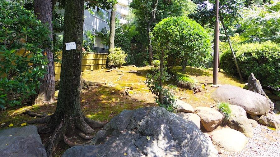 渋谷区 猿楽塚13(南塚)