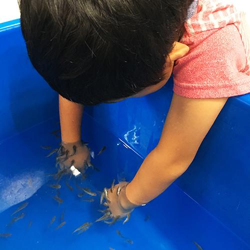 ヤマトヤシキの催し「夏の水族館」でわが子と遊ぶ♪④