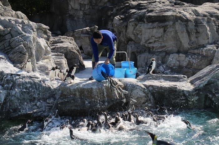 ペンギンたちのごはんの時間
