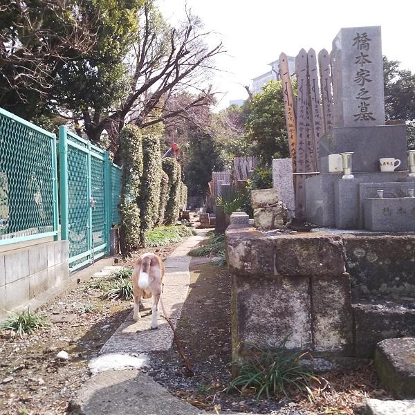 墓地をさんぽ