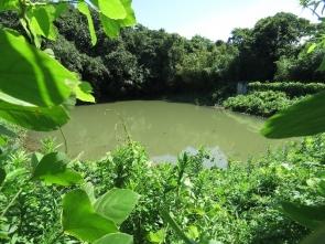 190831015 ため池の様子2