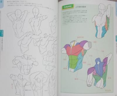 イラスト解体新書 (9)