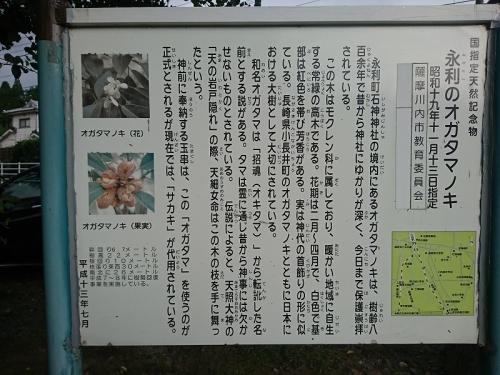オガタマ酒造8
