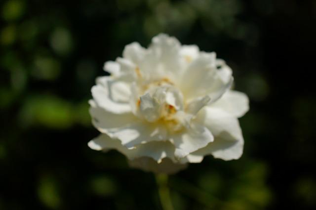 s-DSC01386.jpg