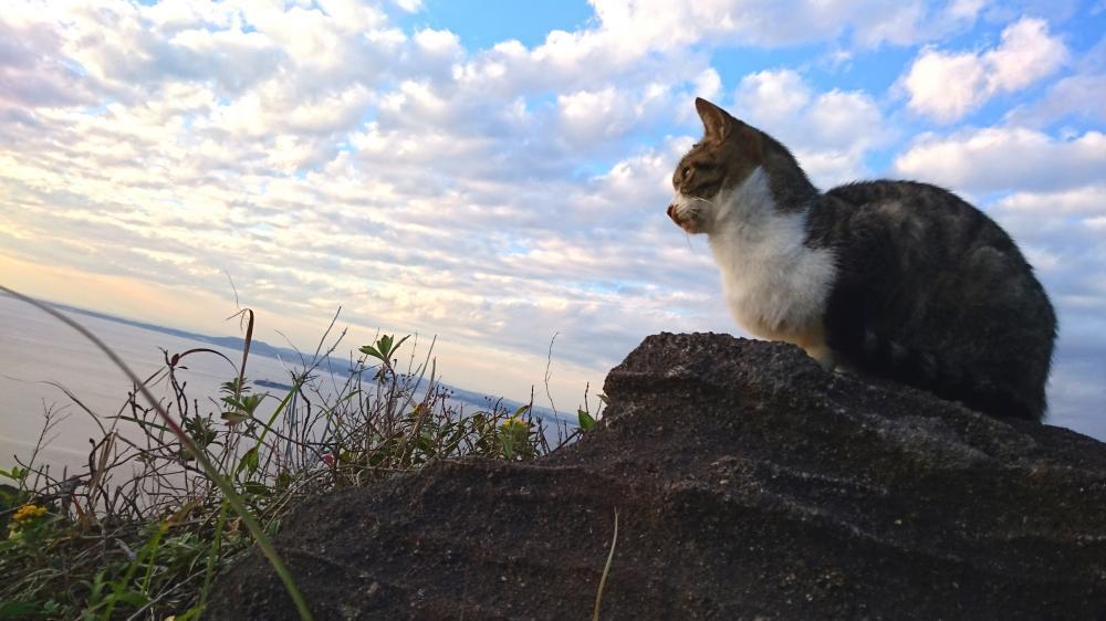 のこぎり山 猫