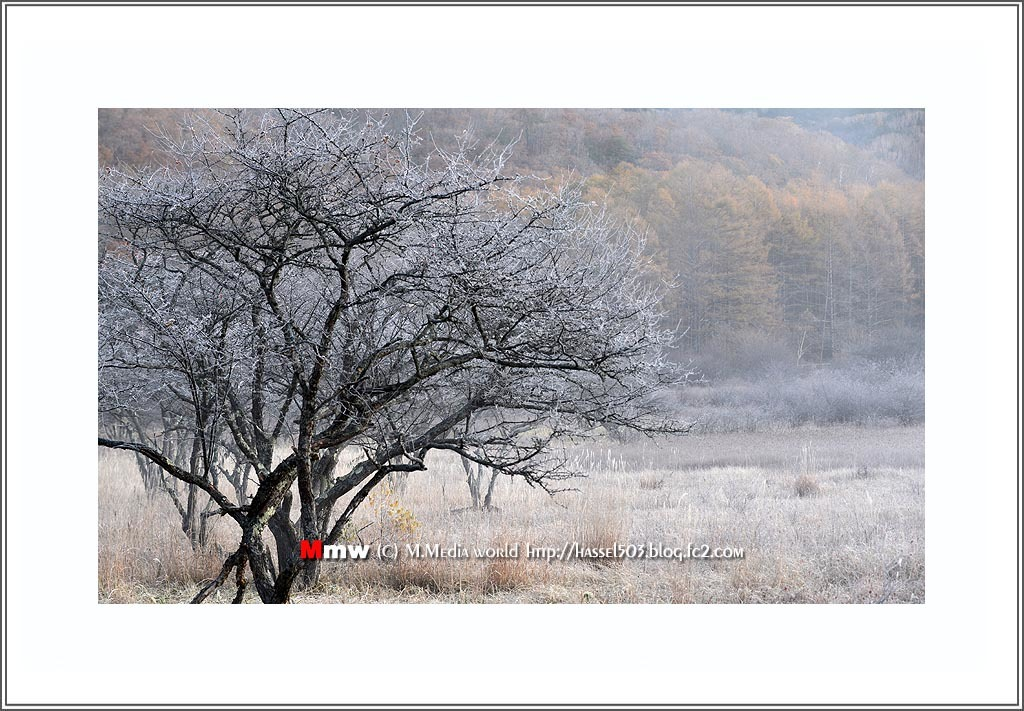 fc2_19_11_24.jpg