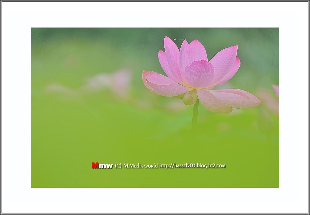 fc2_19_7_05.jpg