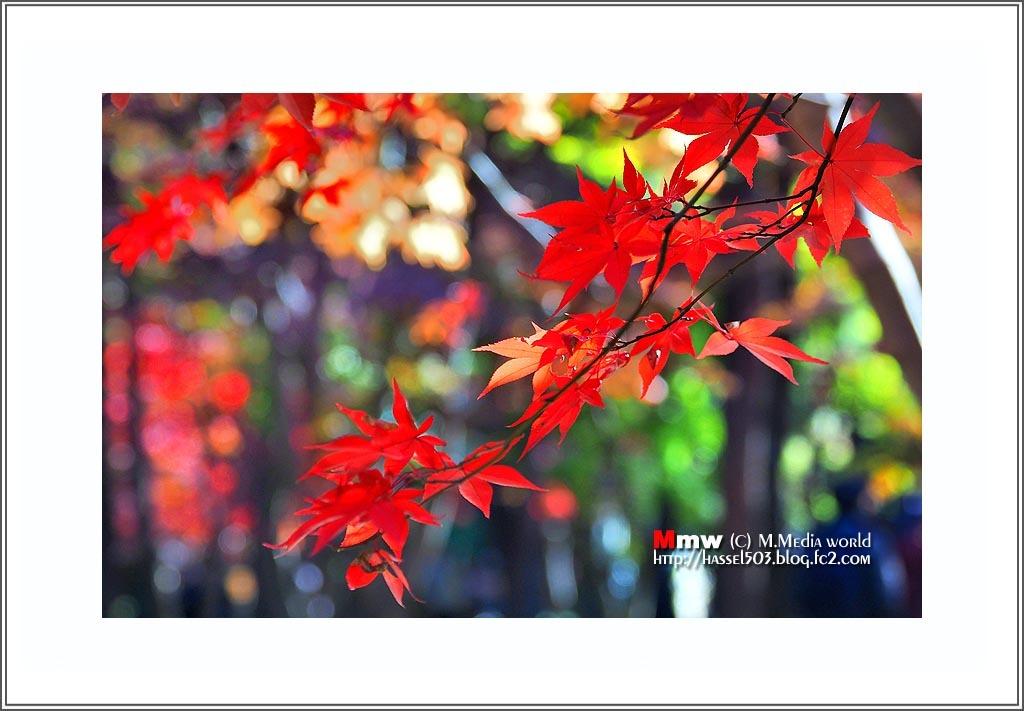 fc2_19_he_12_02.jpg