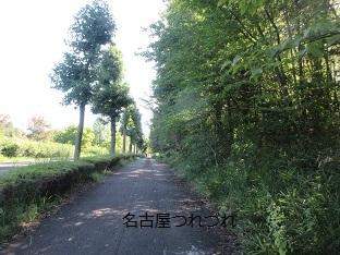 9月初旬の緑地