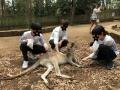 オーストラリア7 カンガルー
