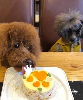 20191205薬膳ケーキ
