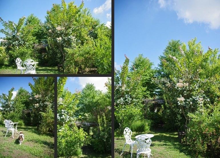 IMGP7774-vert-horz.jpg