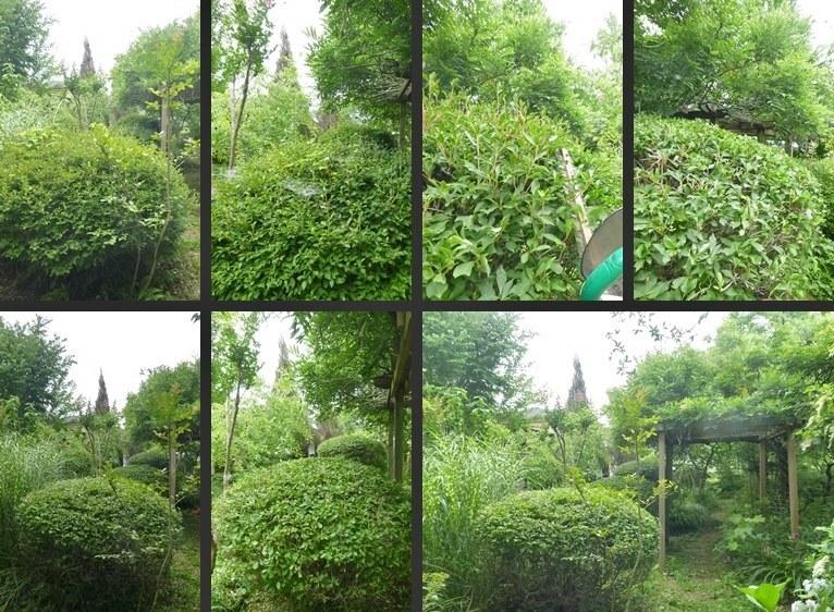 P2520343-horz-vert.jpg