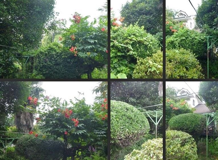 P2530419-tile-vert.jpg