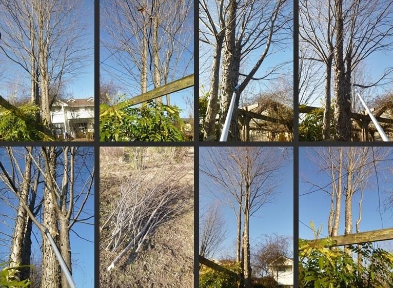 P2590211-horz-vert.jpg