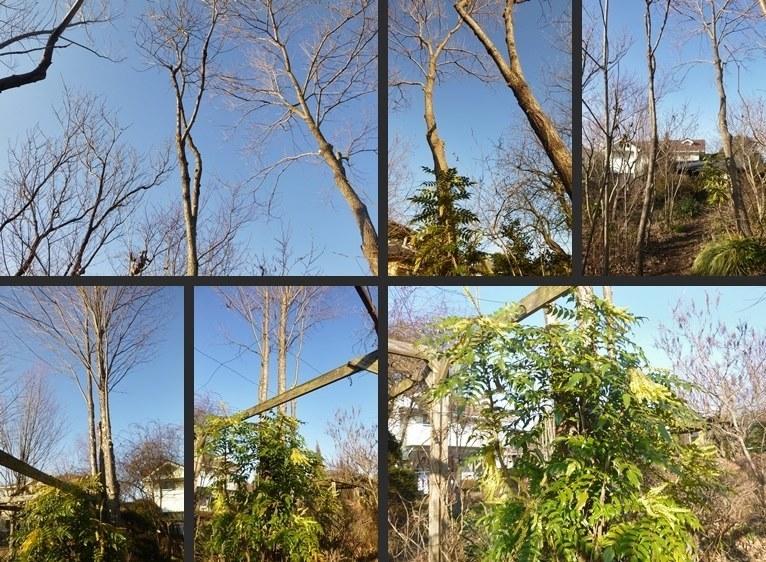 P2590260-tile-vert.jpg