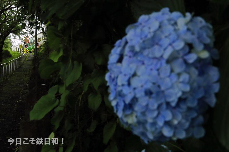 _MG12112.jpg