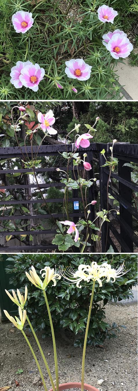20190927秋の庭2