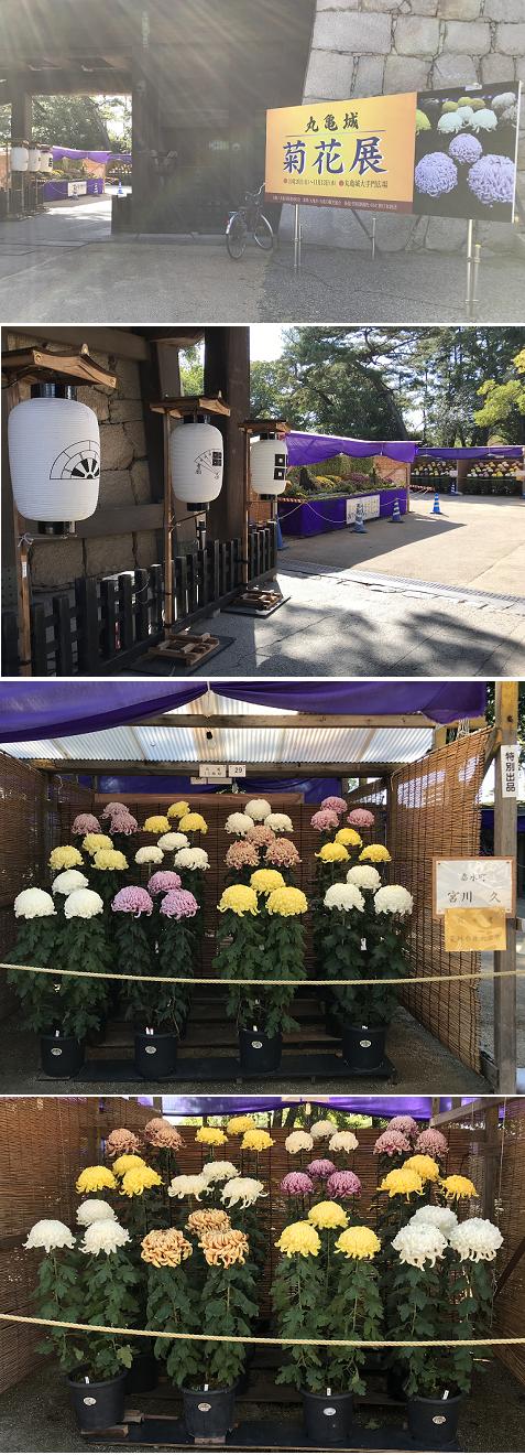 20191105菊花展1