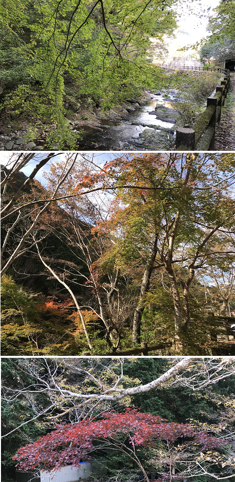 20191110美霞洞渓谷3