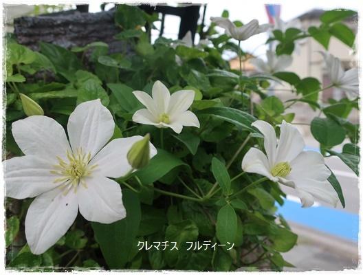 IMG_391019.jpg