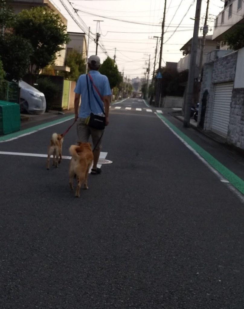 散歩7(2019:8:5)