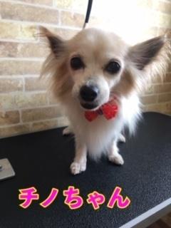 9月19日チノちゃん