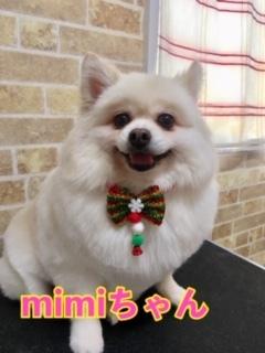 12月7日mimiちゃん