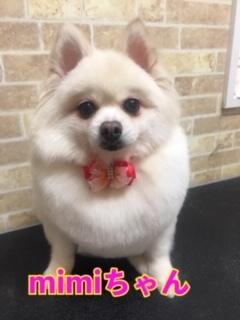 1月27日mimiちゃん