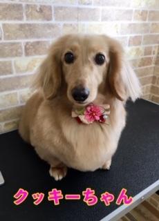3月5日クッキーちゃん