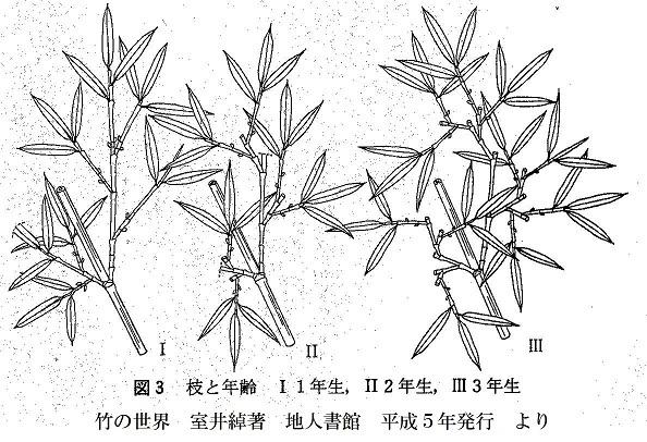 s05-竹の世界 室井