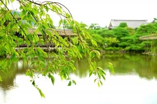 190731heianjingu(23).jpg